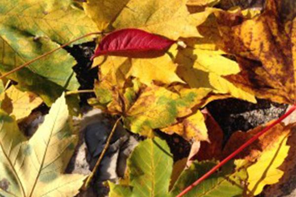 Hétköznapi őszi felüdülés az Aranybánya Hotelben